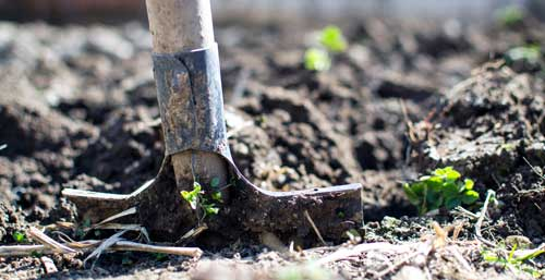Live Green, Vive Verde by Investing in Landscaping!